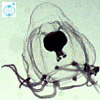 PlanktonNet Image