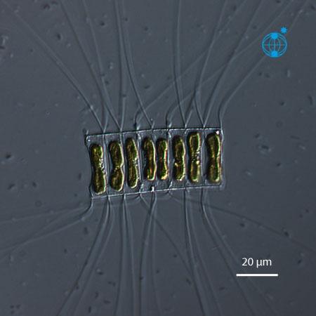download genetics genomics and breeding of oilseed brassicas